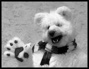 Polar Bear/Dog